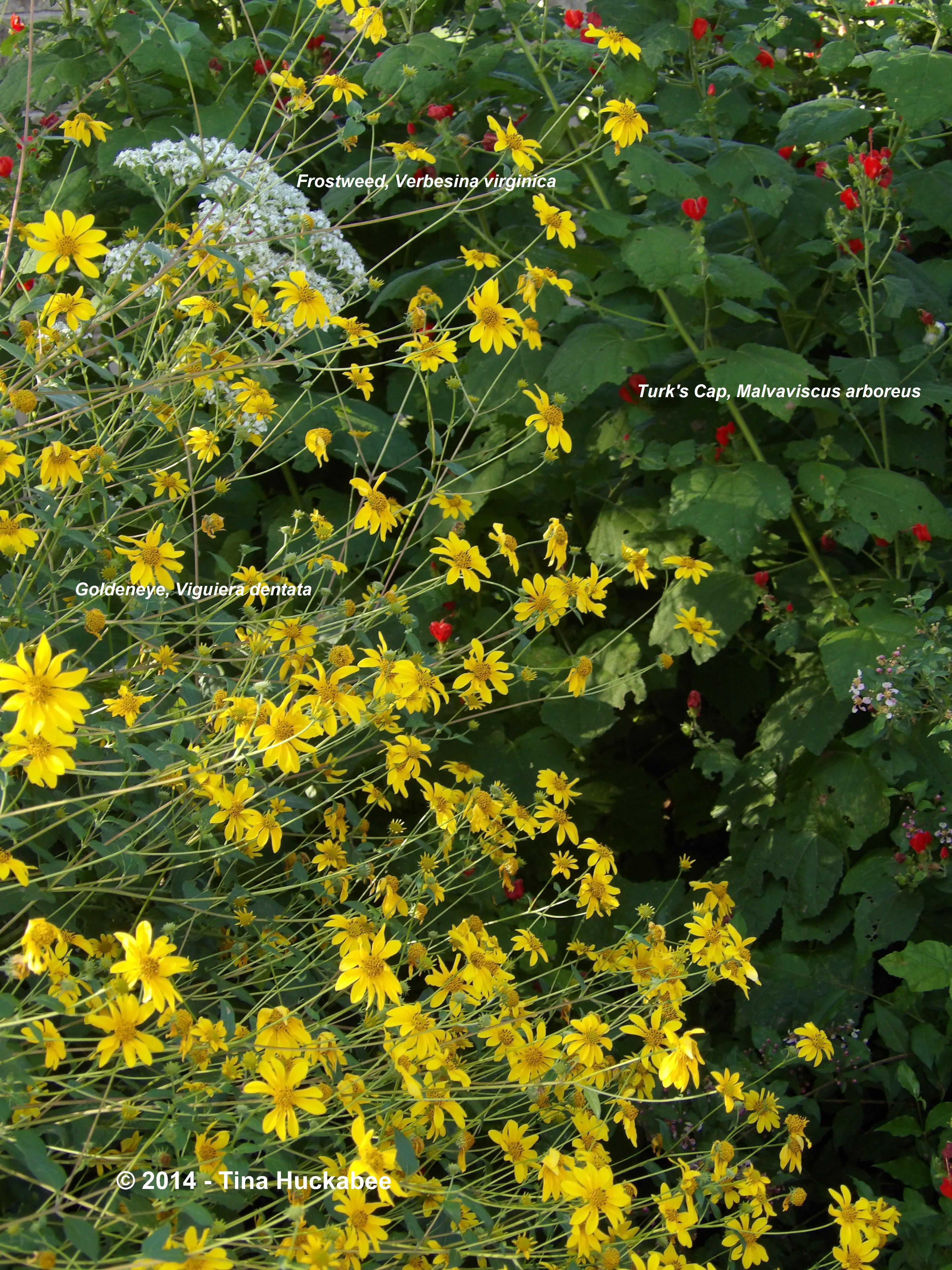 Gardening with native plants – What Should I Plant in My Garden