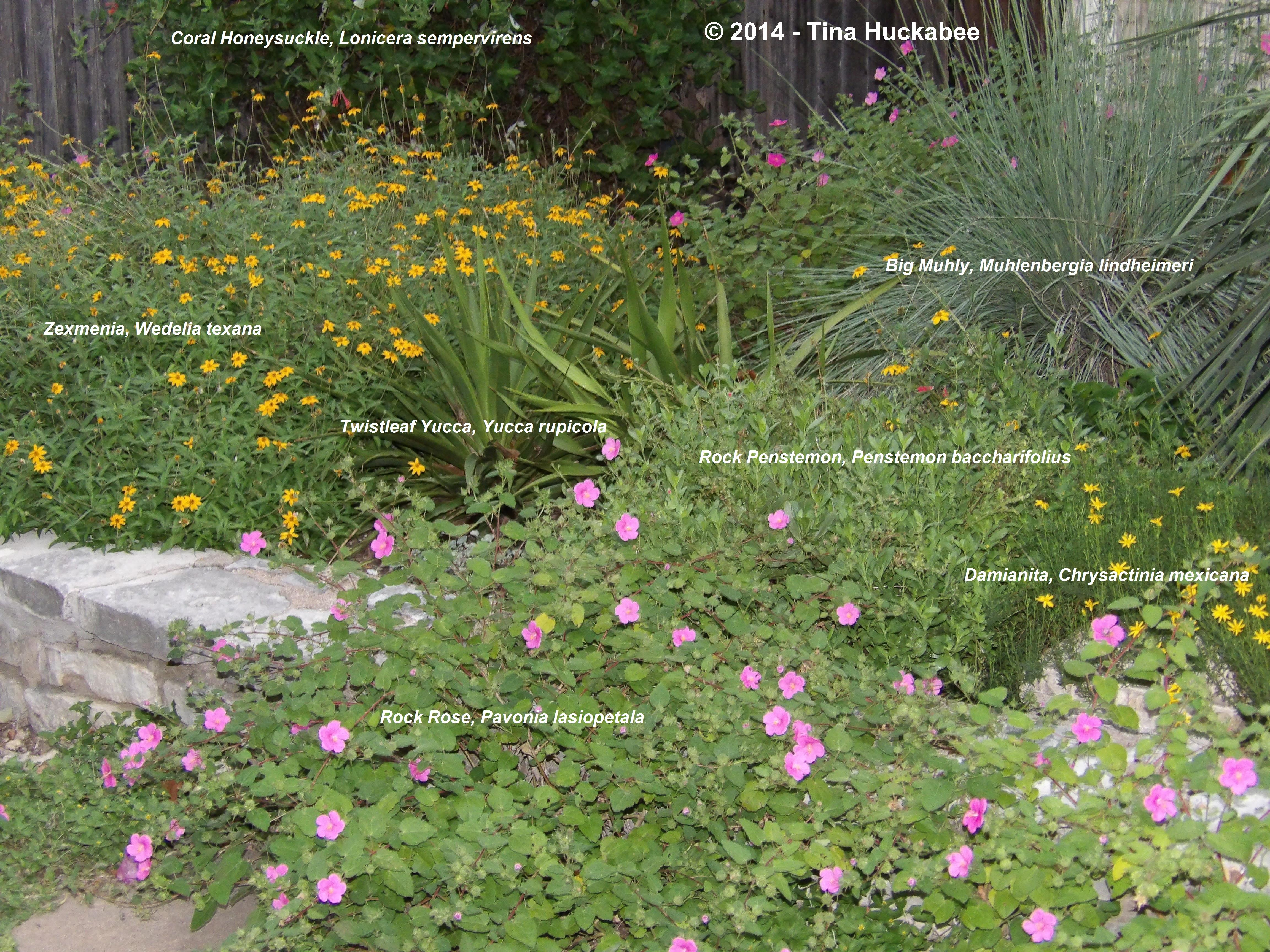 Texas native plant week my gardener says for Landscaping with native plants