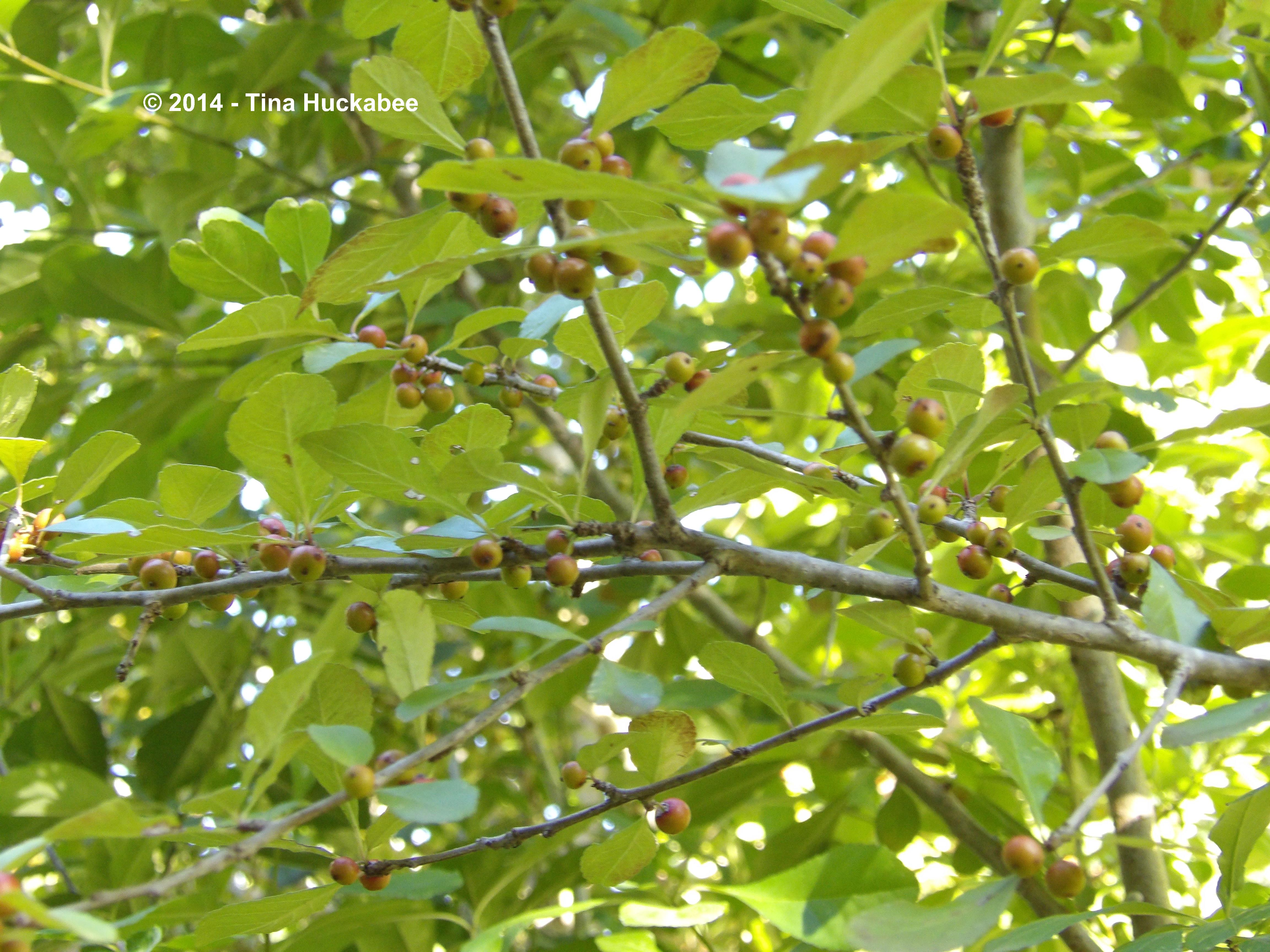 Tree with orange berries in fall juegosagratis com
