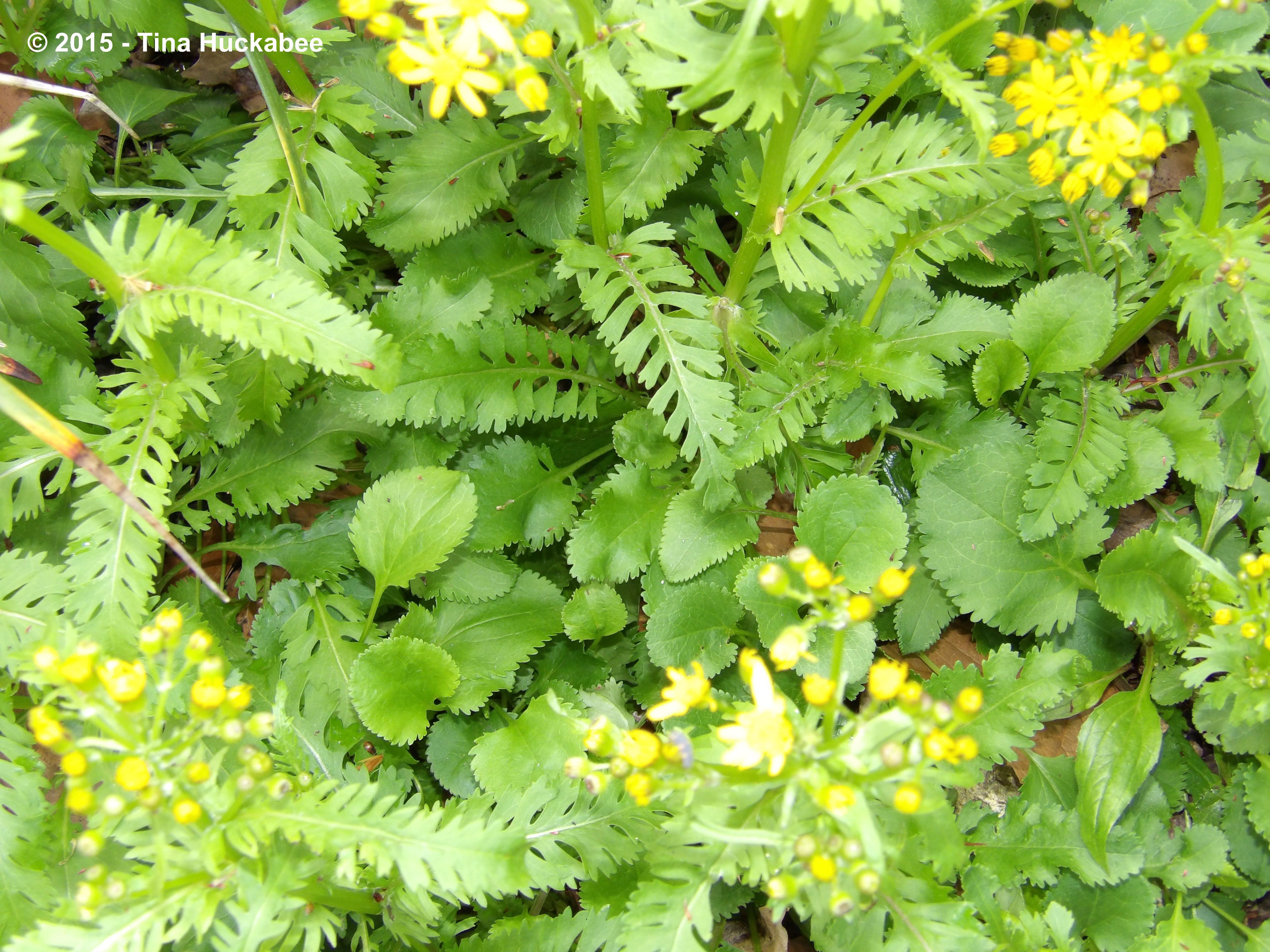 Martha gonzales rose my gardener says imgp6222w mightylinksfo