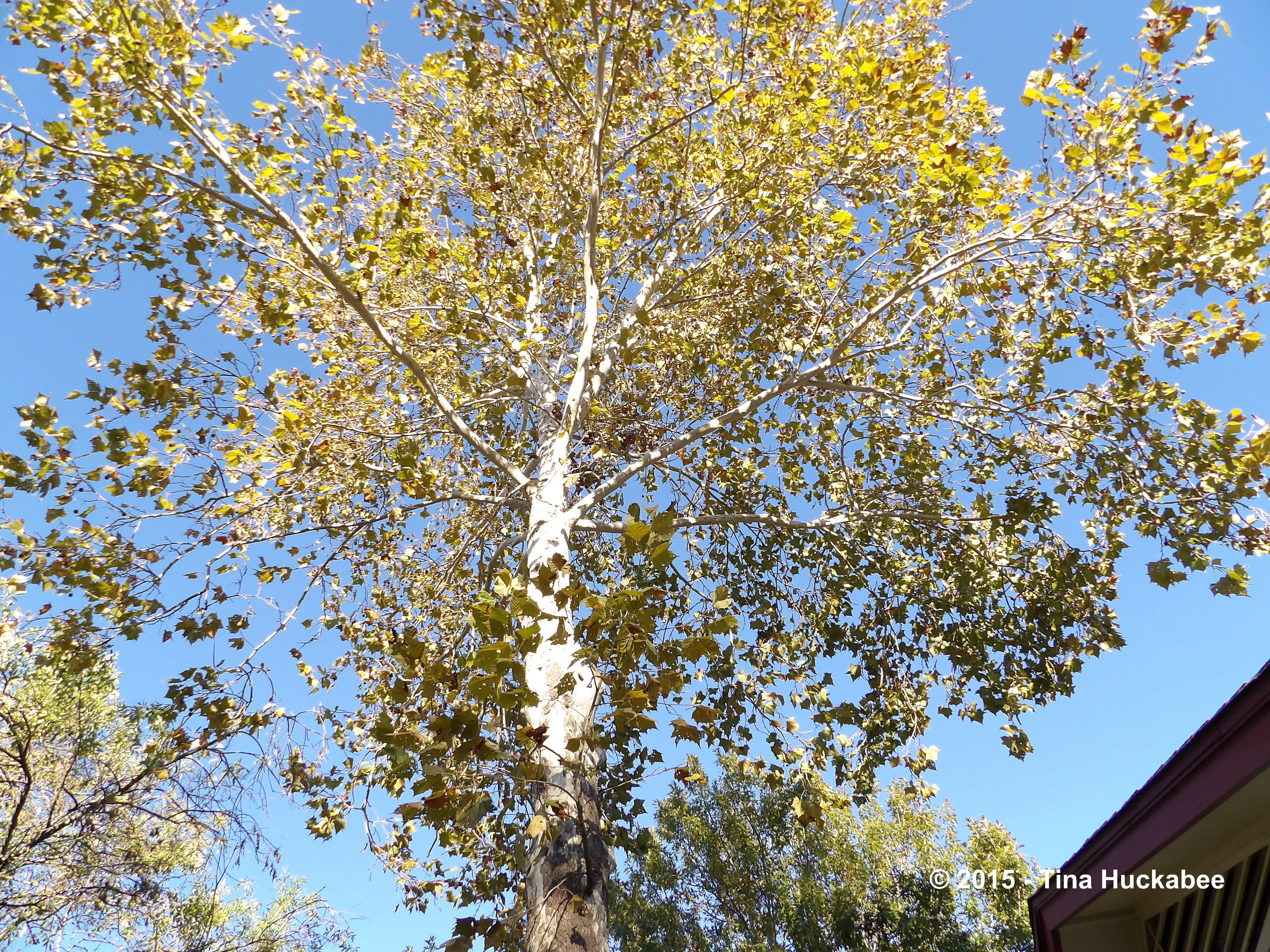 Tree Following | My Ga...