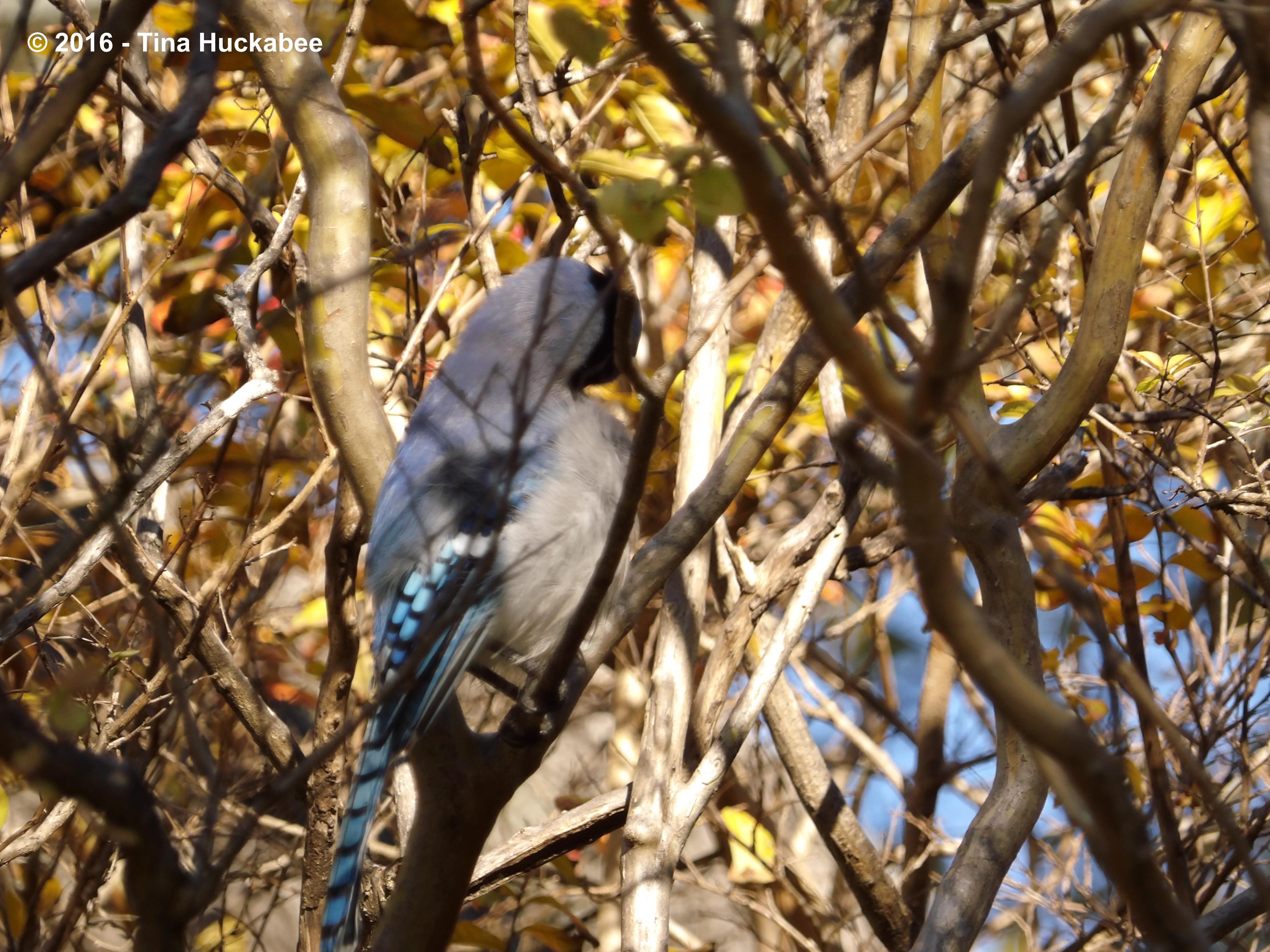 Wildlife Wednesday January 2016 All About Birds My Gardener Says
