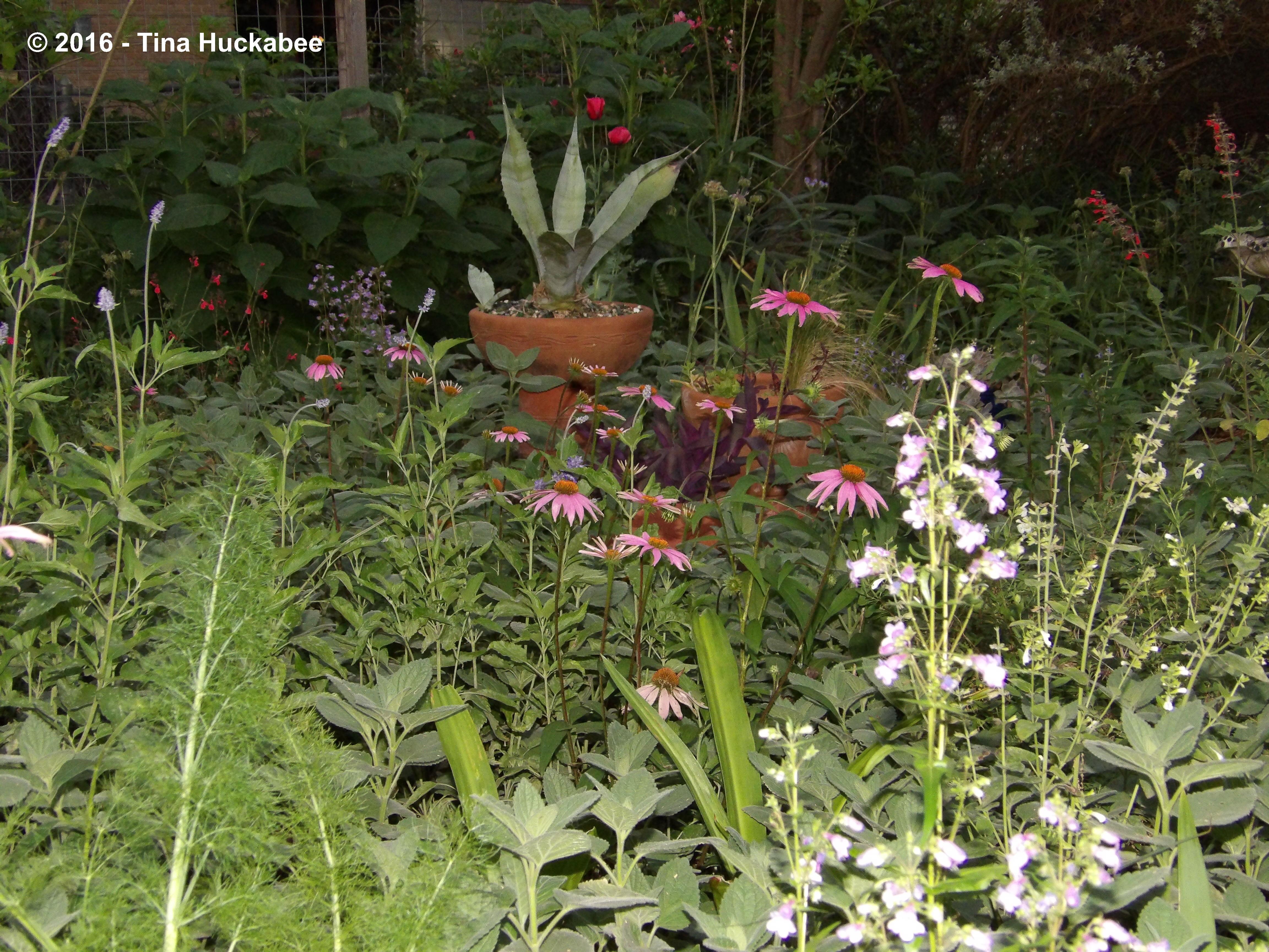 Garden Bloggers Bloom Day My Gardener Says Page 2