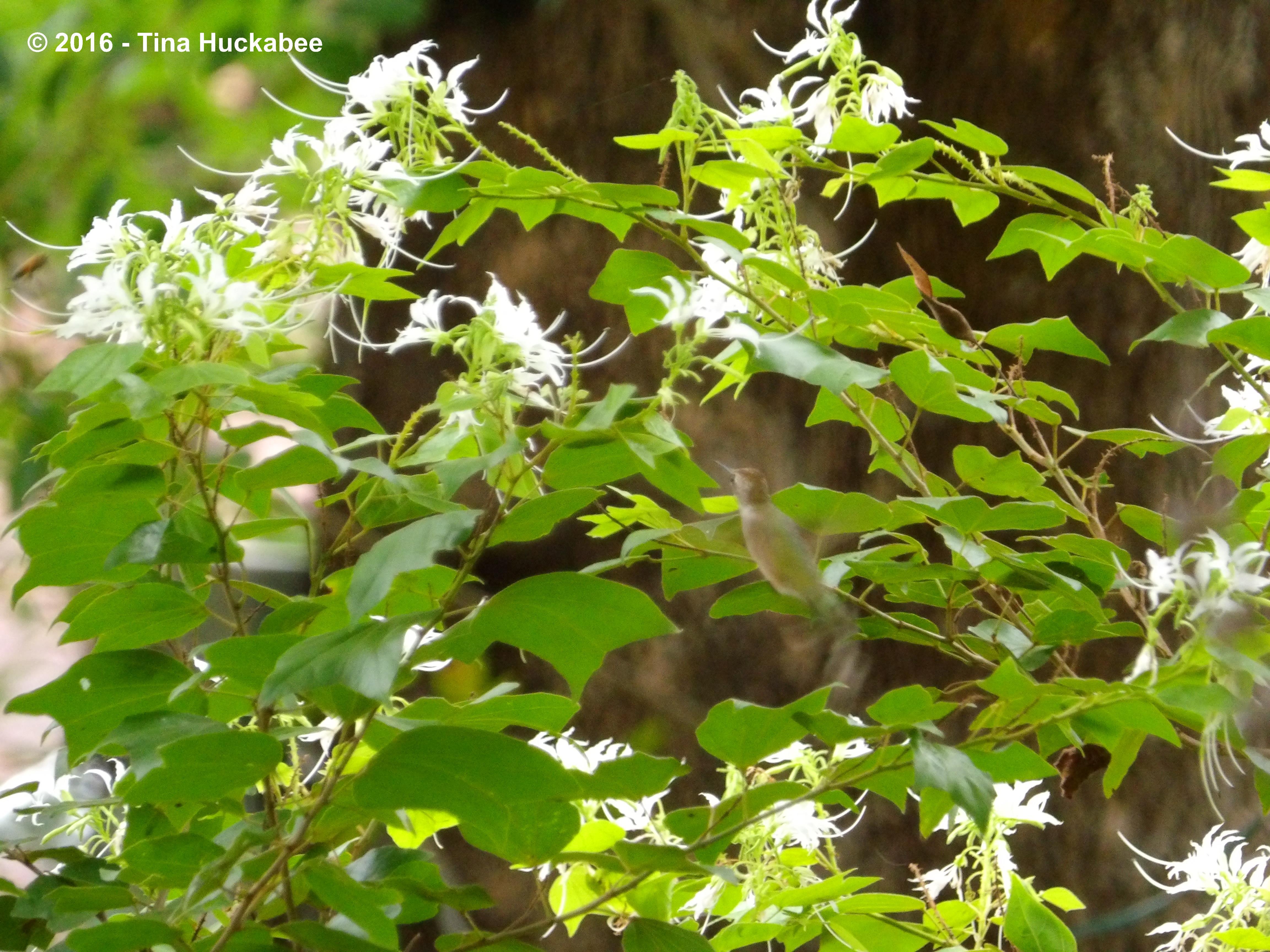 bacillus thuringiensis israelensis my gardener says u2026