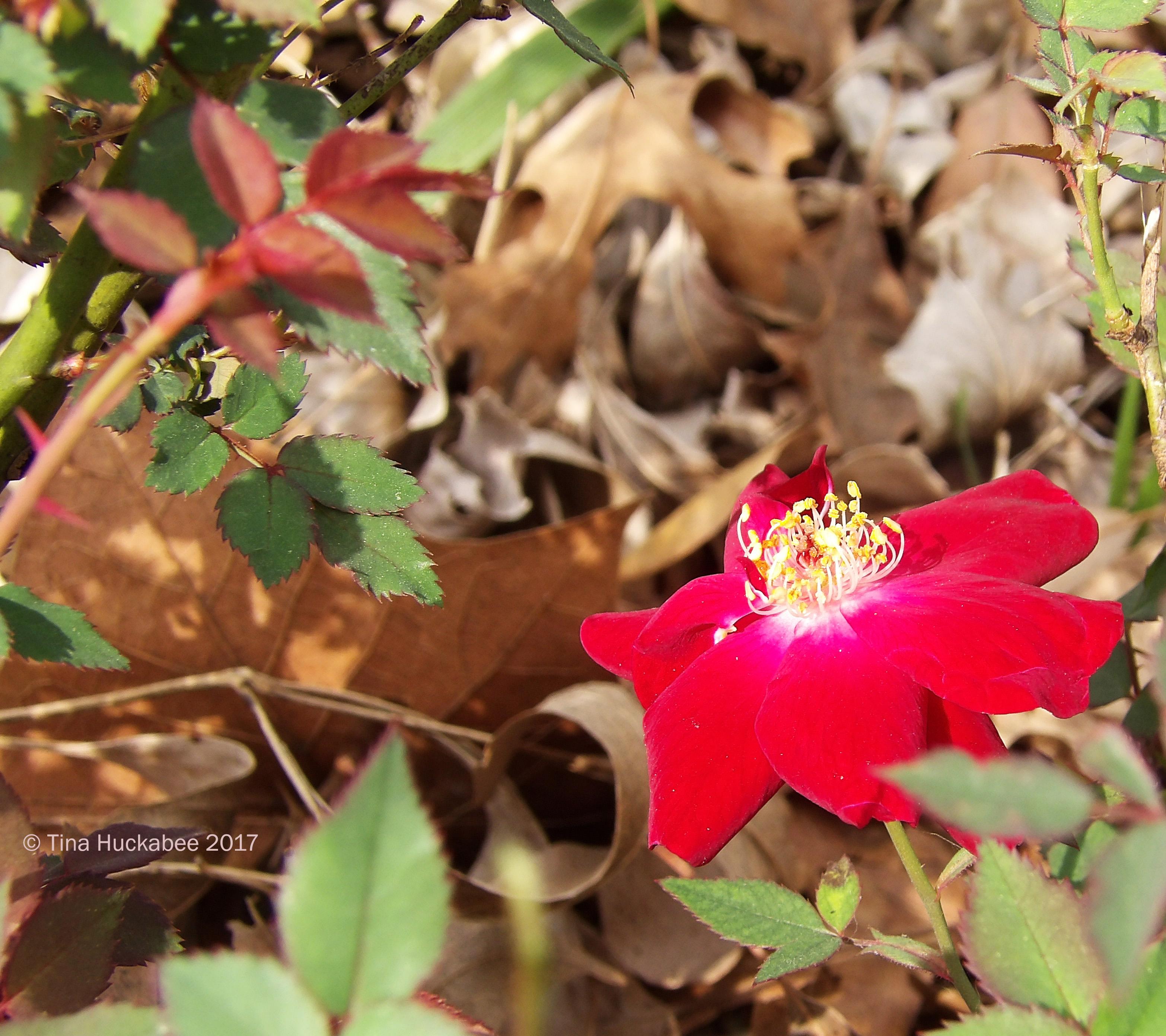 Martha Gonzales Rose | My Gardener Says…