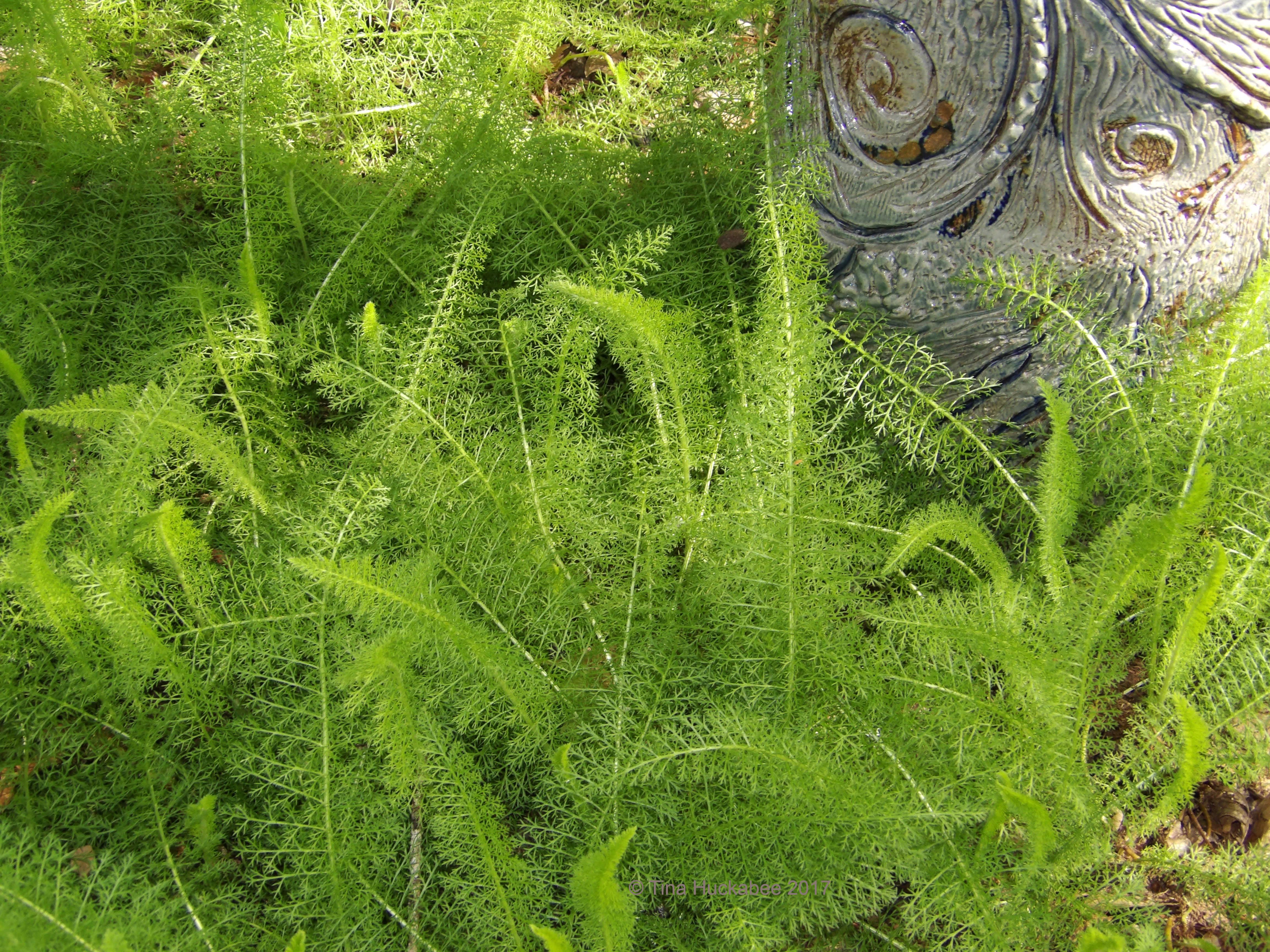 my gardener says u2026 yeah it u0027s work but it u0027s less work than grass